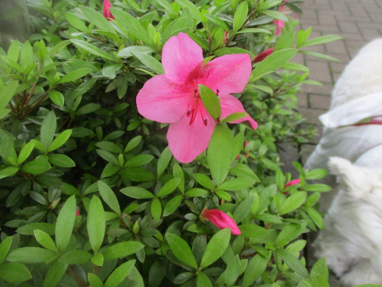 曇ってますが・・・