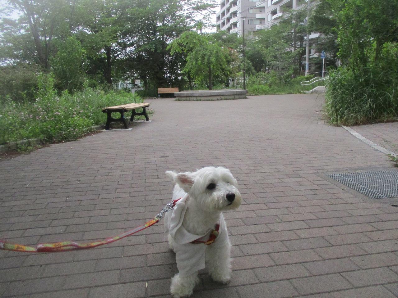 久しぶりのお散歩道