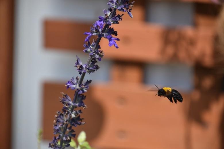 013 蜂