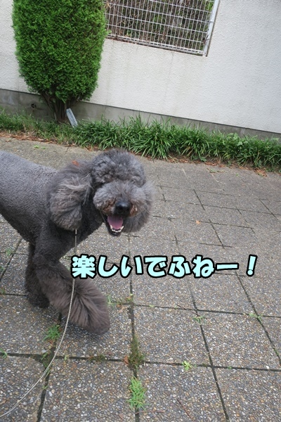 IMG_221520170808.jpg