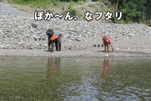 IMG_290520170917.jpg