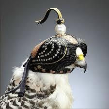 鷹の目隠し