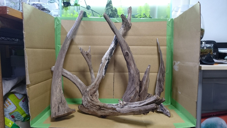 流木遊び①