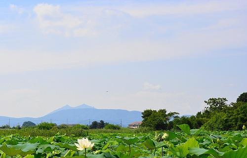 s-レンコン田の向こうに筑波山20170717