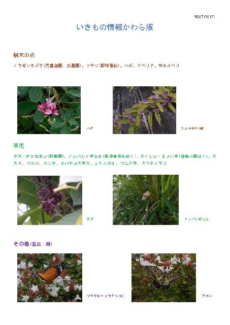 いきもの情報かわら版(9月)
