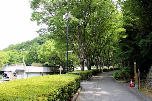 0260:徳島県立文書館 文書館への並木道①