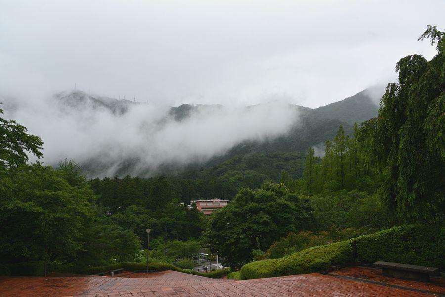 雨の弥彦-1