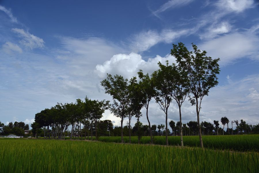 夏空に雲-4