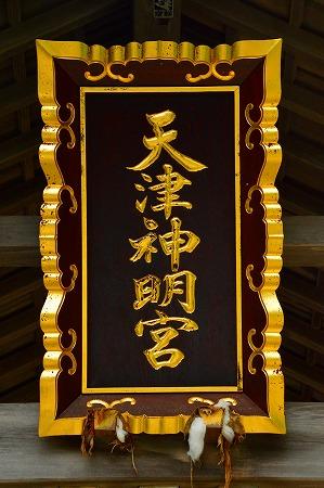DSC_天津7537_01