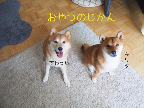 ふじりんご3
