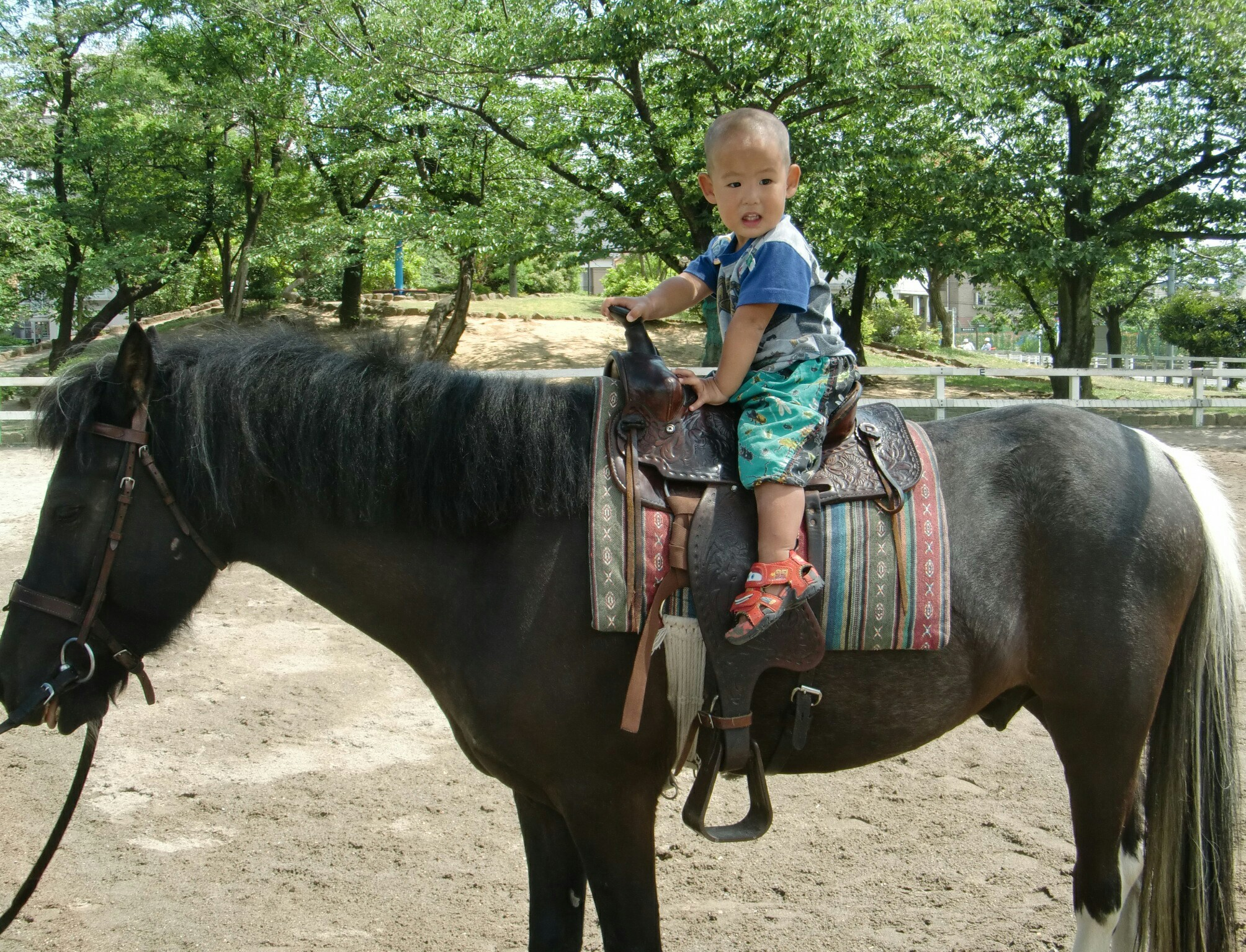 上千葉砂原公園 ポニー乗馬