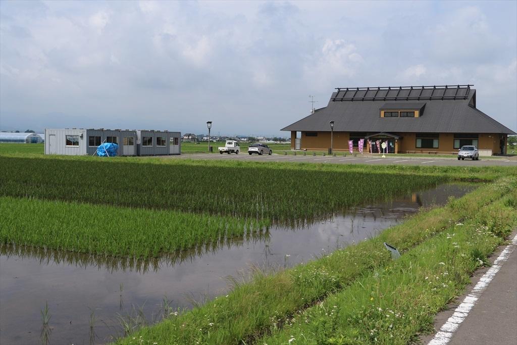 すぐ近くの田圃には古代米が植えられていた_3
