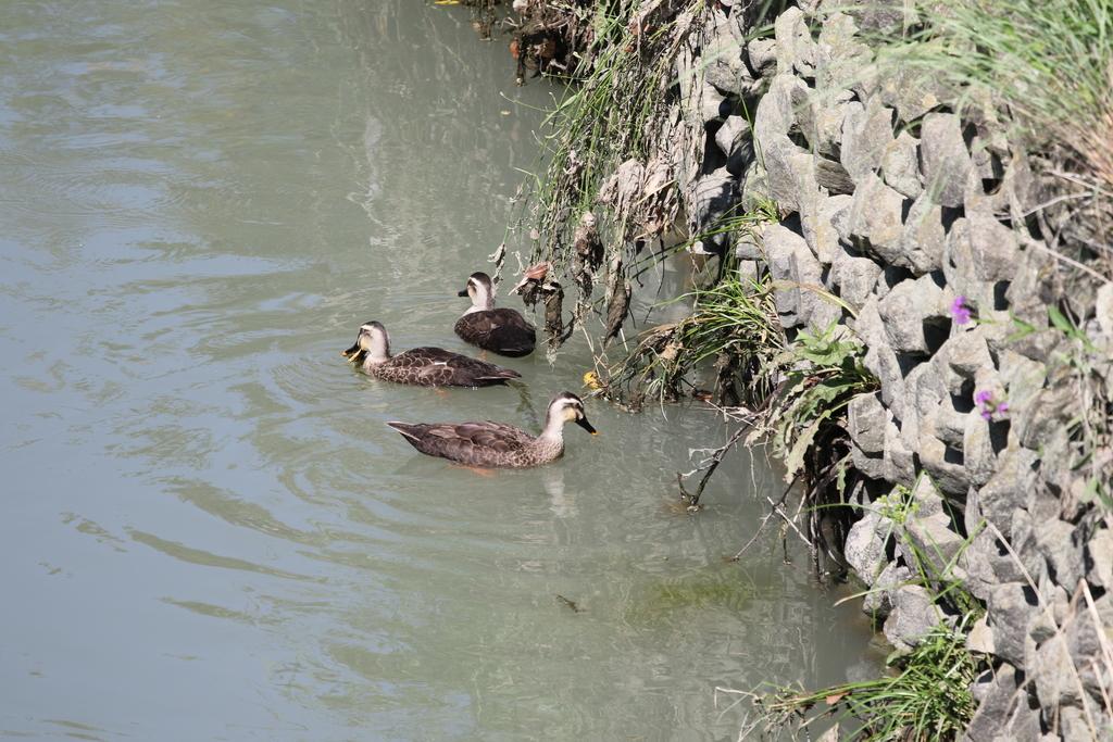 逆川の鳥さんほか_1