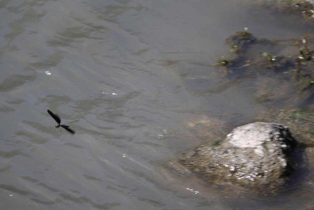 逆川の鳥さんほか_6