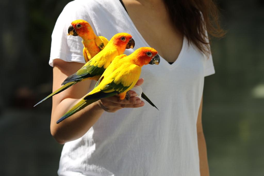 掛川花鳥園の鳥さん_3
