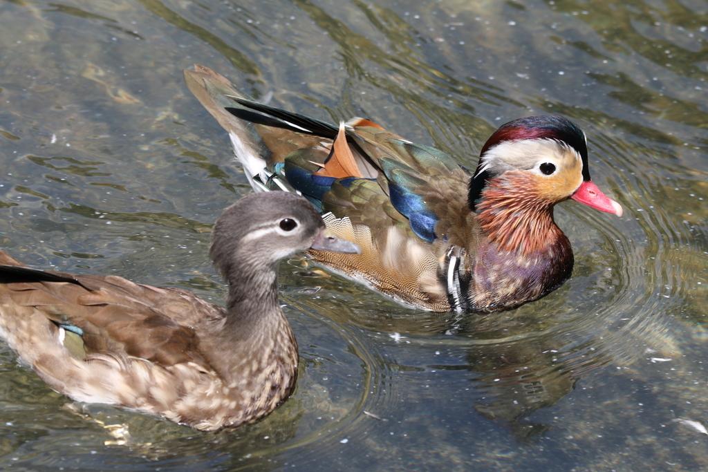 掛川花鳥園の鳥さん_2