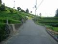 170820和束石寺地区の茶畑を上る