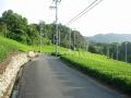 170820石寺地区の茶畑を抜ける