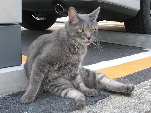 cat-021.jpg