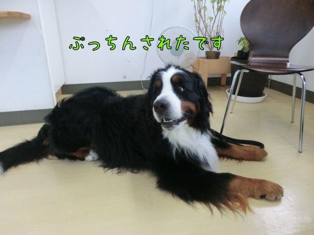 CIMG5696_201707231457319ad.jpg