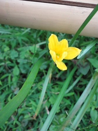 今日の花⑪