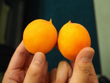 abricot-shinshusour-webs.jpg
