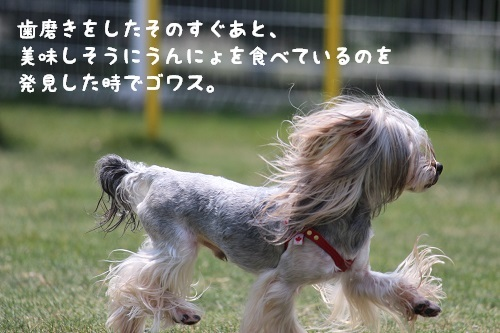 IMG_2475.jpg