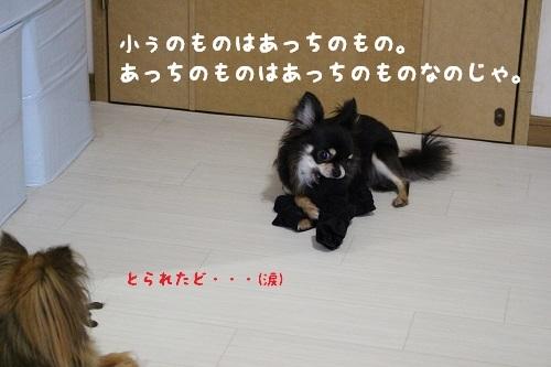IMG_2540.jpg