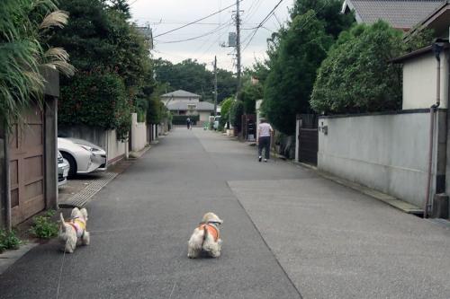 hitoyakurumanotooranaimichidaga1.jpg