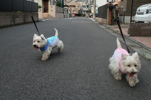 jyosichinimizukakeyametehosi7.jpg