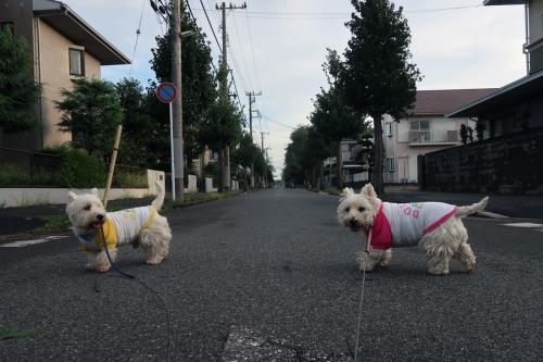 tatumakichuihononakanosanpo3.jpg
