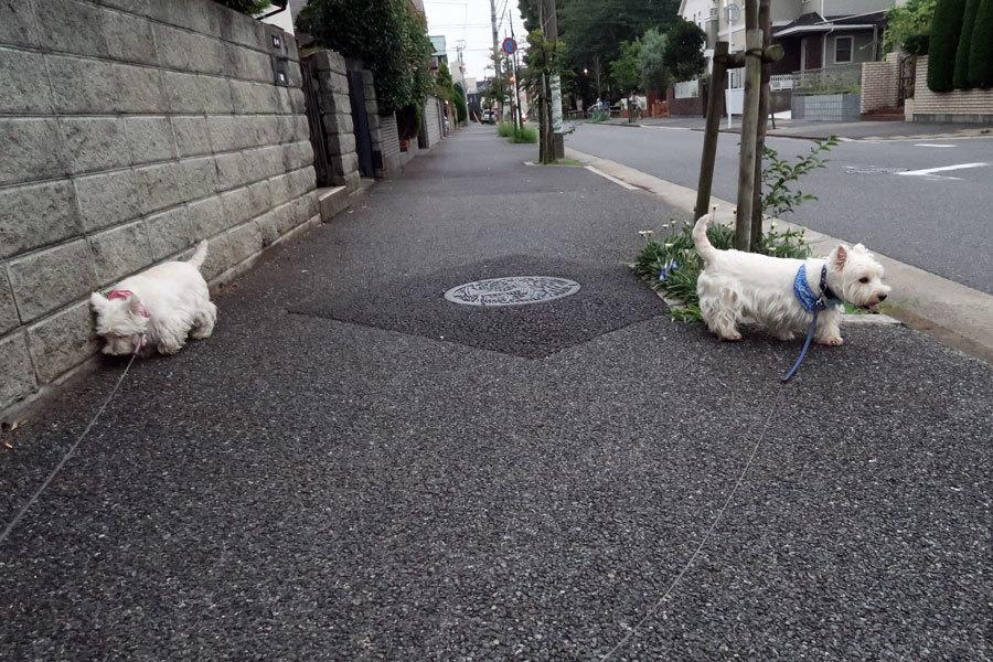 yononakayasumitotunyurasiine4.jpg