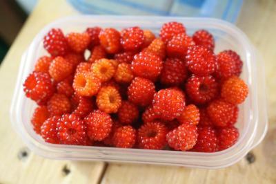 エビガライチゴの収穫3