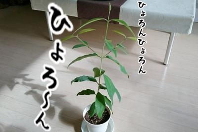 DSC_2953 (2)-3