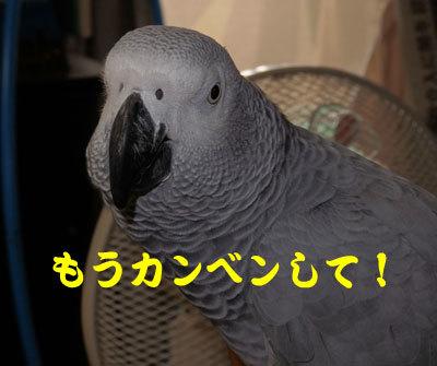 8_かんべんして