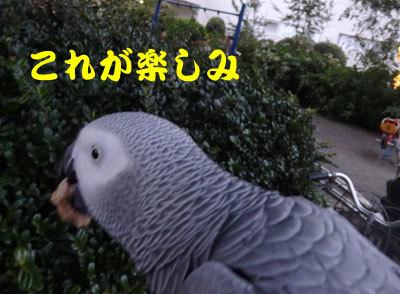 7_楽しみ