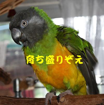 8_チャッピ