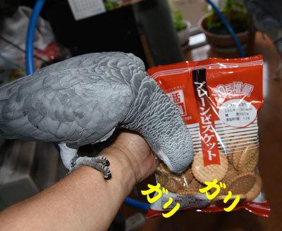 8_クッキー
