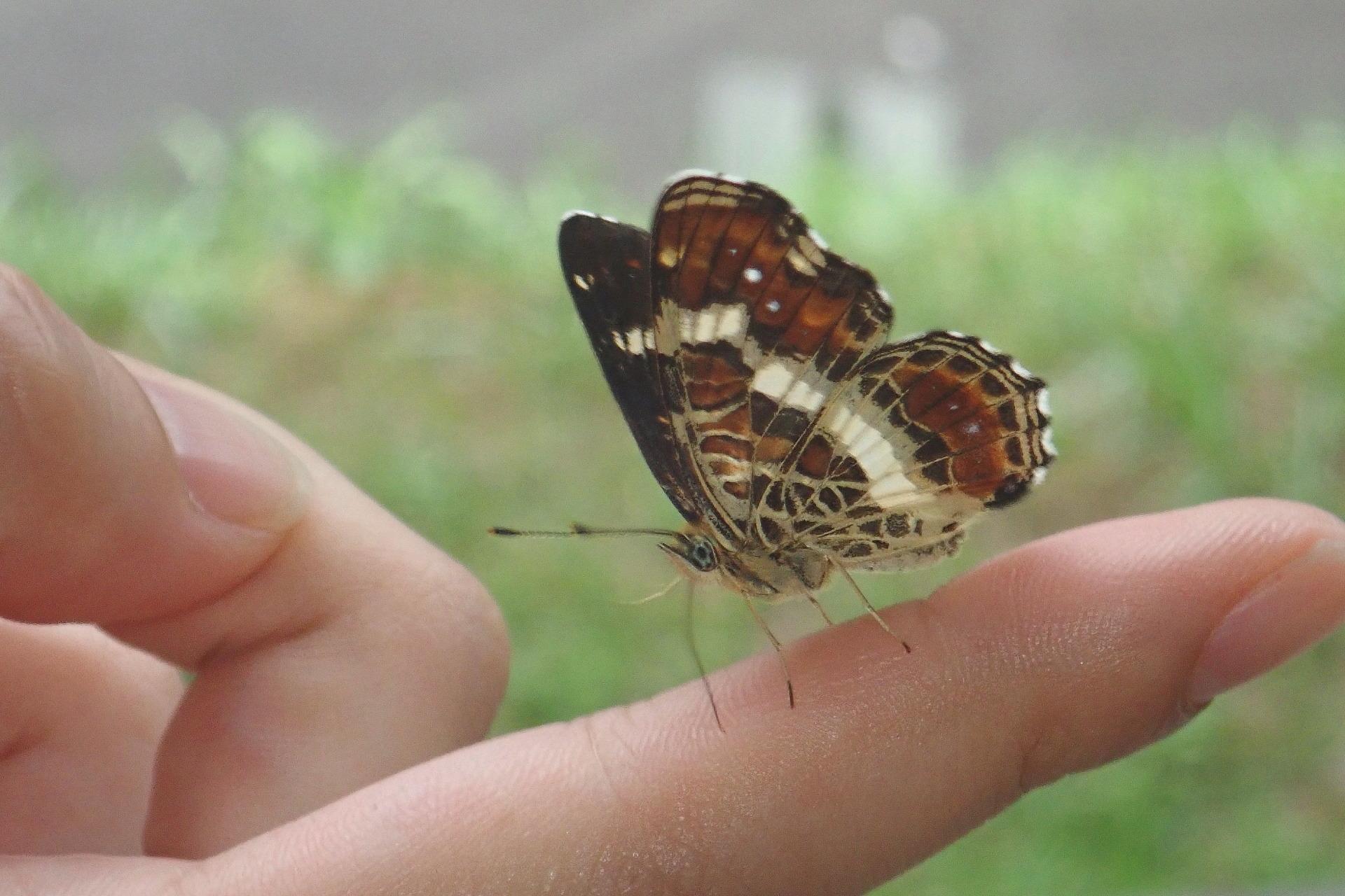 テノリサカハチ