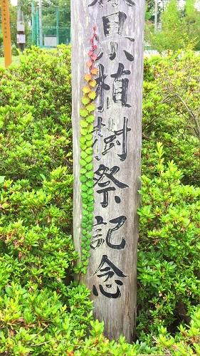 鶴田8-20 (1)_500