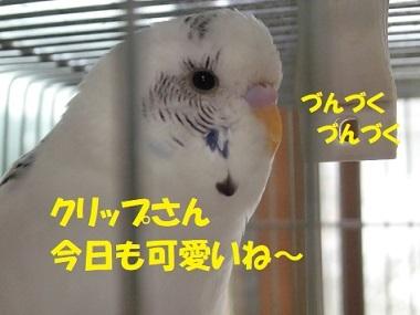 CIMG9063.jpg