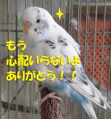 CIMG9065.jpg