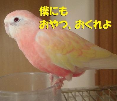 CIMG9328.jpg