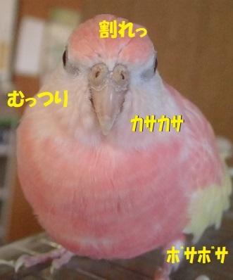 CIMG9495.jpg