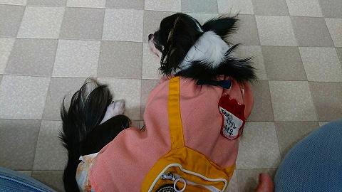 保護犬 (4)
