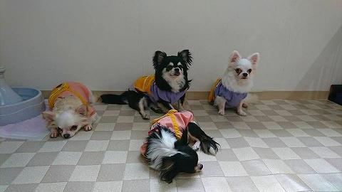 保護犬 (2)
