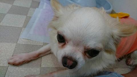 保護犬 (3)