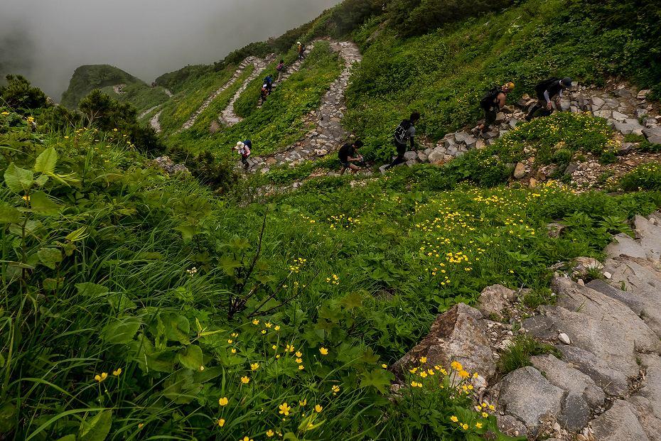 2017.07.14白山の花が本格化28