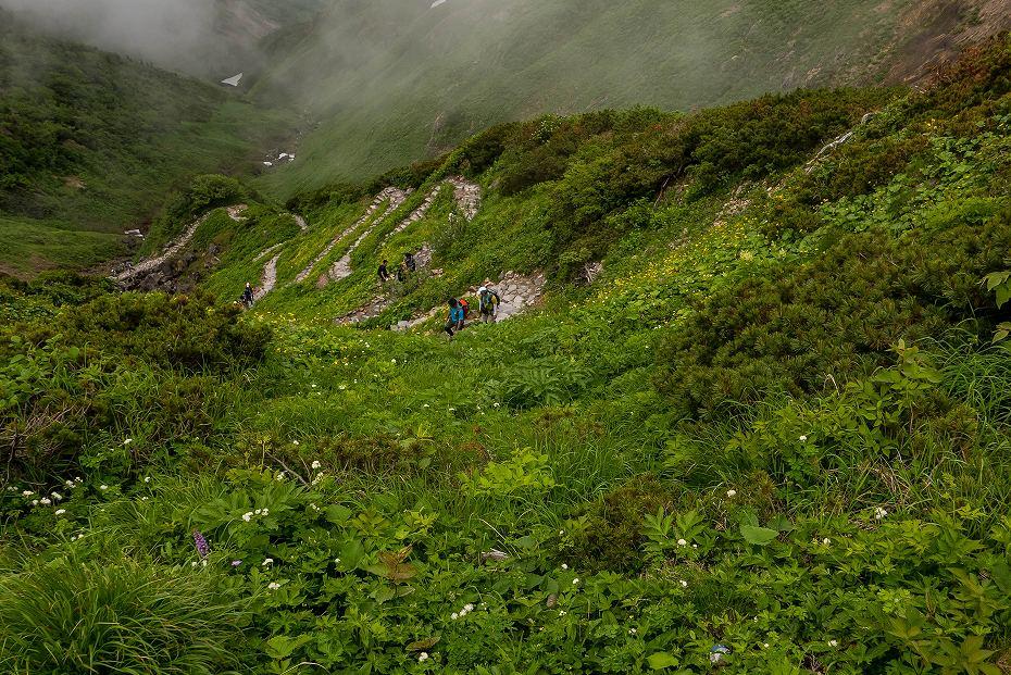2017.07.14白山の花が本格化27