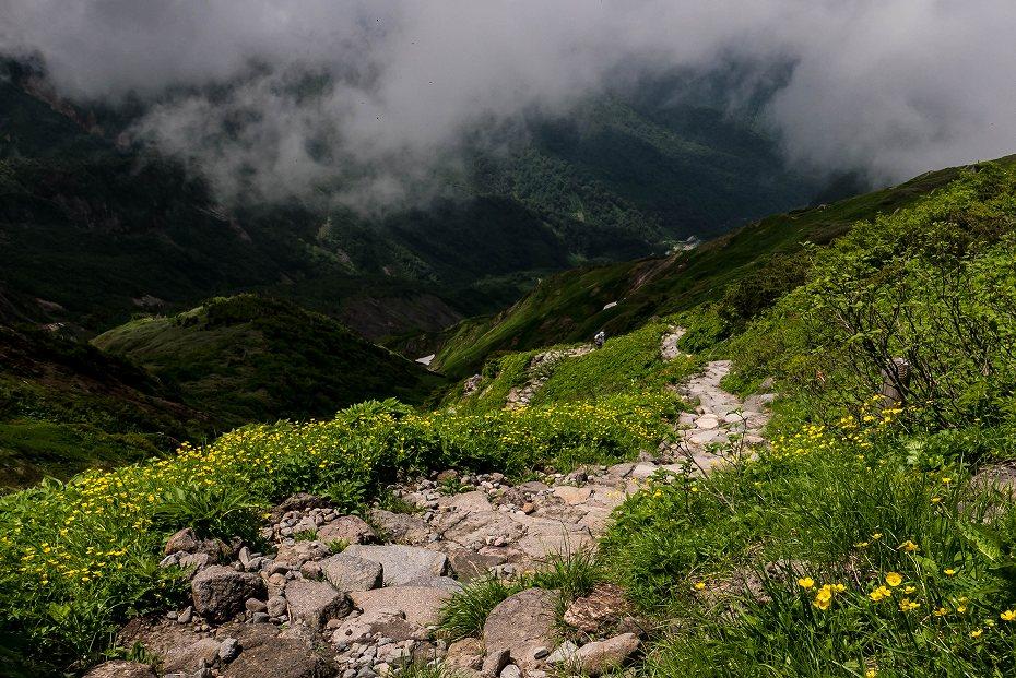 2017.07.14白山の花が本格化26